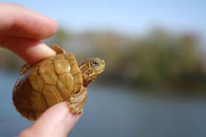 Yay Baby Turtle by Kierbyy