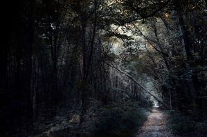 a Path in the Woods by unseen0x29a