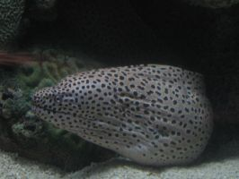 White and Black Spotted Eel by AngelicalDesign