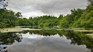 Clandeboye Lake by dhc72