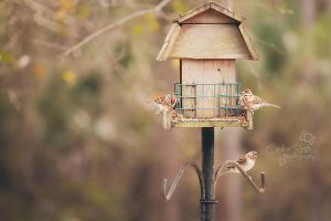 Feeding Time by CandiceSmithPhoto