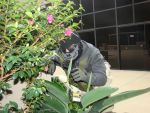 Ghost in the bushes ( urban warfare) by tikipro