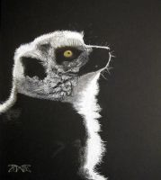 Golden eye - Lemur by cloudmilk