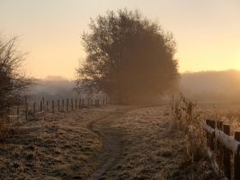 Chilly Morning by Deceptico