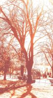 Sunny day in the park by Filianthur