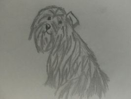 My Dog Sketch by punkliss