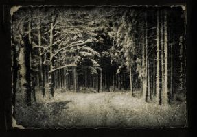 Wintertime by IMAGENES-IMPERFECTAS