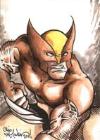 Wolverine ACEO 082811 by ChrisMcJunkin