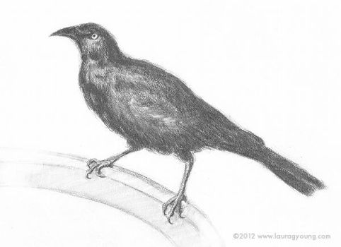 Return of the Grackle by LG-Young