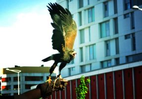 Eagle fly free by CBaddict