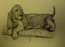 Basset Hound Puppy by charcoal-almighty