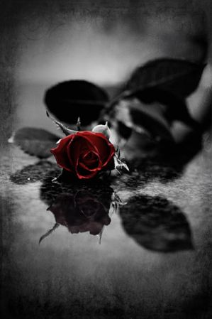 http://th08.deviantart.net/fs41/300W/f/2009/033/b/1/Red_gothic_Rose_by_Ashayaa.jpg