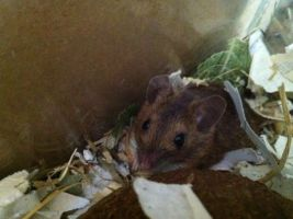 Woodmouse by Kayleigh-Kaz