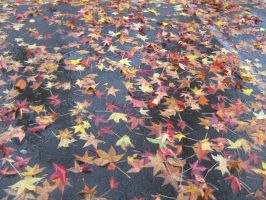 Leaves in the Parking lot by Kinetic-Passion