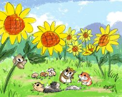 Sunflower Valley by mashi