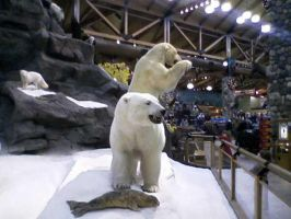 Cabelas7 by cattlebaron1