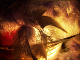 Plumes 1 by Flora-Silve