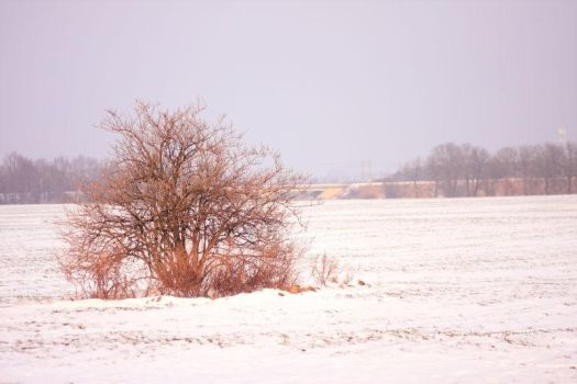 Winter 2012 - 26 by Eufrosis