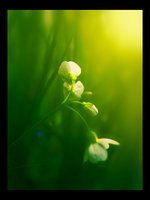 Plants 11 by omikron1989