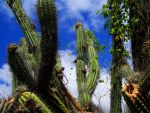 Just a Cactus by GongjuLeopard