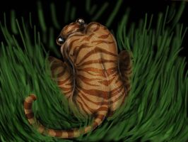 Tigress in the Night by corvox