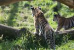 Cubs. by Ravenith