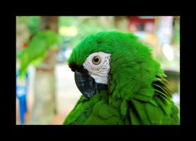 Green Parrot by Saher4ever