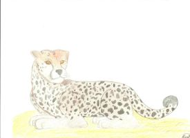 Cheetah by ShininLatias