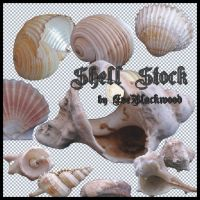 sea_shell_stock_pack by EveBlackwood