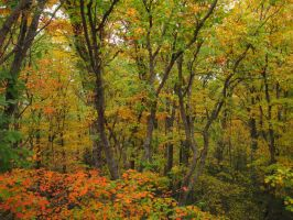 Fall Forest 4 by Salamander-Stock
