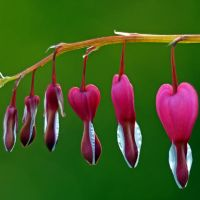 hearts on the line by augenweide