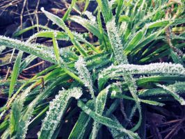 Icy grass by Pamba