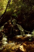 Waterfall In Forest by Miyuki--Chan