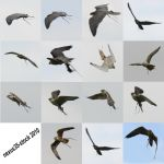 Birds of Prey - Flight 2 STOCK by nexus35-Stock