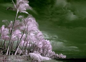 Infrared Palm Trees by La-Vita-a-Bella