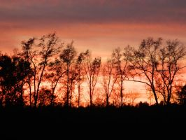 Backyard Sunset by JennyM-Pics