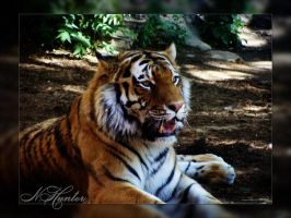 Tiger 0017 by xNHunterx