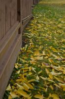 fence and leaves by Sbojnik