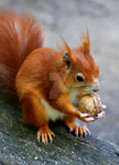 give me some nuts by fussel01