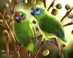 Double-eyed fig parrots by LilyT-Art