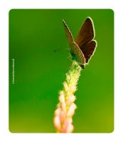 butterfly life  1 by Numicor