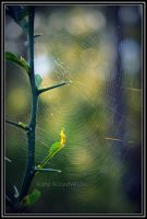 Spider web by Purple-Dragonfly-Art
