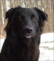 Athos, black beauty by chipset