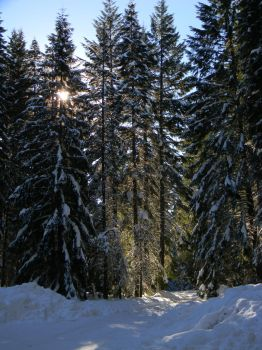 More snow covered trees... by The-Lover-Of-Life
