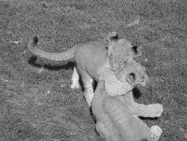 Lioness Cubs Wrestling by LuthienNenharma