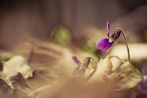 the memories of spring III by torobala