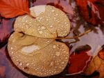 leaf on water and water drops by rockmylife