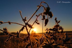 Sunrise on a beautiful frosty winter day 12 by MT-Photografien