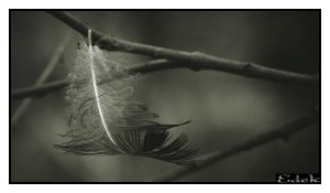 Feather by Edek
