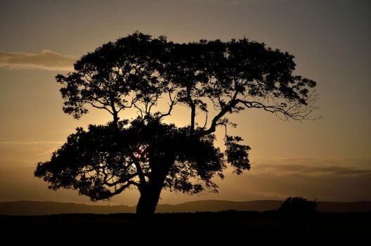 LONE TREE AT SUNSET by major-holdups